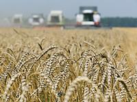 Зерно на экспорт