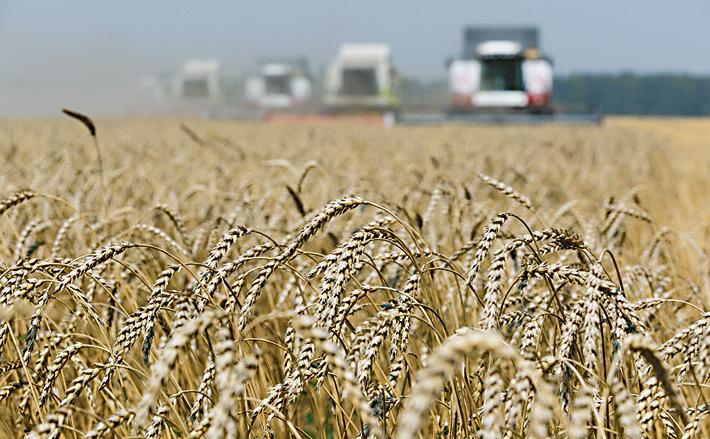 Эксперты снова повысили прогноз урожая зерновых