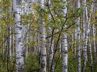 Спасти леса